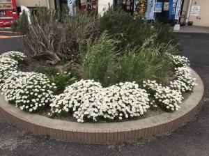 ロード銀山お花
